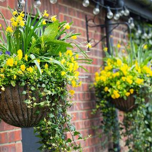 winter-hanging-baskets-with-yellow-flowers